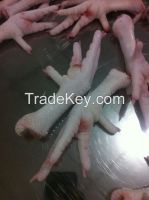 Chicken feet/paws/claws