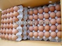 Fresh Chicken Eggs / Fresh