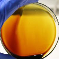 Hydroxytyrosol from Olive Fruit