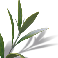 OLEUROPEIN form Spanish Olive Leaves