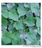 Perlite for Horticulture, sell expanded perlite