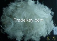 Hot SellingWashed White/Grey Duck Feather for Filling Sofa, Cushion, Bedding Products