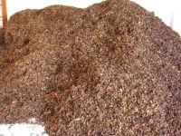 dried frangipani