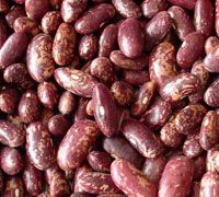 Red, Purple Speckled Kidney Beans