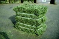 Alfalfa Hay, Supreme Quality Alfalfa Hay, Timothy Hay at factory prices