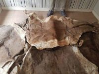 Dried Salted Donkey Skin