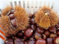 Top quality fresh chesnuts
