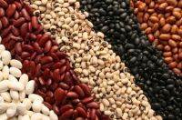 Kidney Beans | Chickpeas | Soybeans | Organic Beans | Lentils