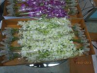 White fresh cut orchid flower