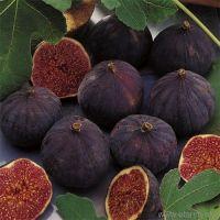 fresh figs, fig,