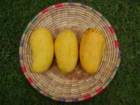 Sweet Mangoes for sale in Bulk!