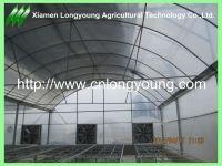 large mutil-span greenhouse