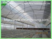 mutil-span greenhouse