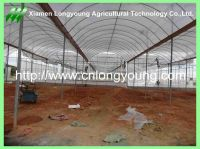 tunnel greenhouse hot sale