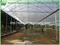 mutil-span greenhouse sale