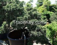 Macro bonsai