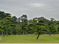 Macro Bnsai Tree