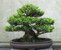 Macro Bonsai Plants