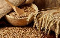 Animal feed Wheat, animal feed barley