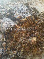 Gum Myrrh - Kenya