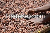 cocoa beans, cocoa powder, cocoa cream, cocoa oil, cocoa shell, cocoa seedlings