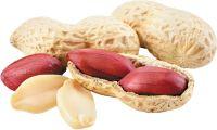 High Quality Peanuts