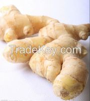Fresh Ginger, Dried Ginger, Air Dried Ginger