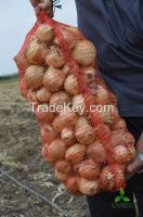 Fresh onions from Ukraine