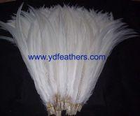 silver pheasant tail