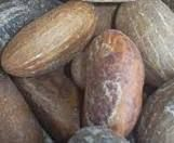 Sesame Seed, Bitter Kola, Garlic, Ginger, Moringa, Neem, Aloe Vera leaf, Garcinia Cambogia, Orange peel, Pepper Seed, Raw herbs,