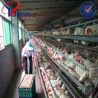 2014 HOT SALE!!! A type layer chicken cage manufacturer