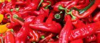 red peper