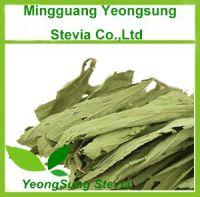 Sweet Stevia Dried Leaf