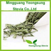 Natural Herbal Stevia Leaf