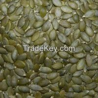 Chinese Pumpkin Seeds Kernel for Exporting