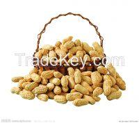 Peanut in shell/Peanut