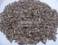 Chinese organic sunflower seeds for sale/sunflower kernel