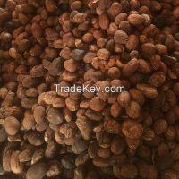 Raw Shea Nuts