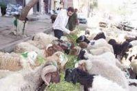 alex wool egypt .com