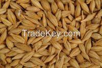 Barley grade 2, 3, feed FOB port Odessa Ukraine