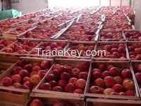 Traiding and export with FRESH FRUITS and FRESH VEGETABLES