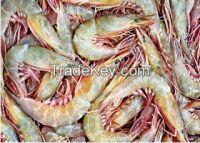 Sword Shrimp