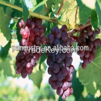 6-Benzylaminopurine (6-BA) for Plant Growth Regulator