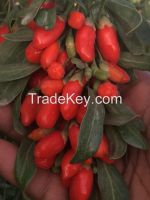 Wolfberry / Goji berry /Lycium Barbarum/Dried Fruit/Organic Fruit/Medlar
