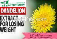 Dandelion Extract ,taraxacum officinale extract