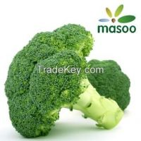 Cheap High Quality Broccoli from Hebei (China) (Wholesale)