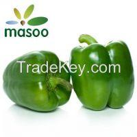 Cheap High Quality Fresh Green Pepper from Shandong (China)