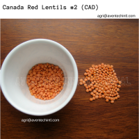 Red Lentils #2 - Canada Red (CAN)
