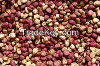 Kola Nuts, Cassue Nuts, Bitter Kolas, Cocoa Nuts,Palm Kanels