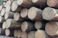 Logs & Sawn Timber